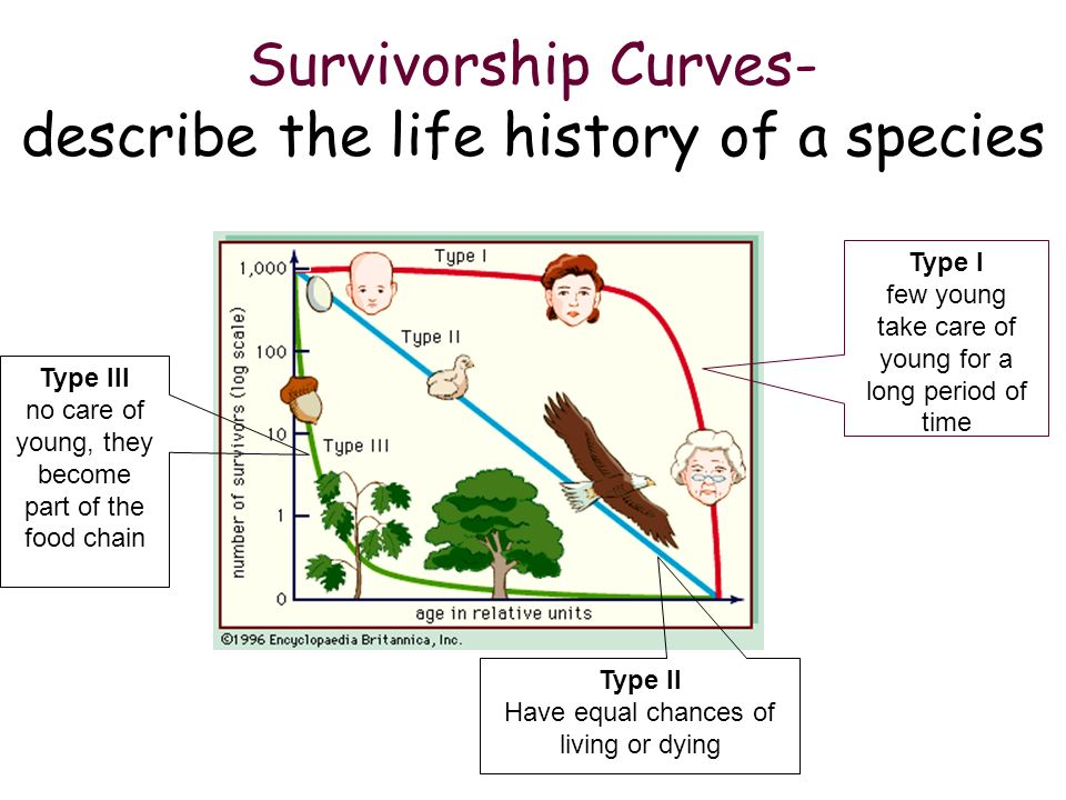 Survivorship Curves- describe the life history of a species Type III no care of young, they become part of the food chain Type I few young take care o
