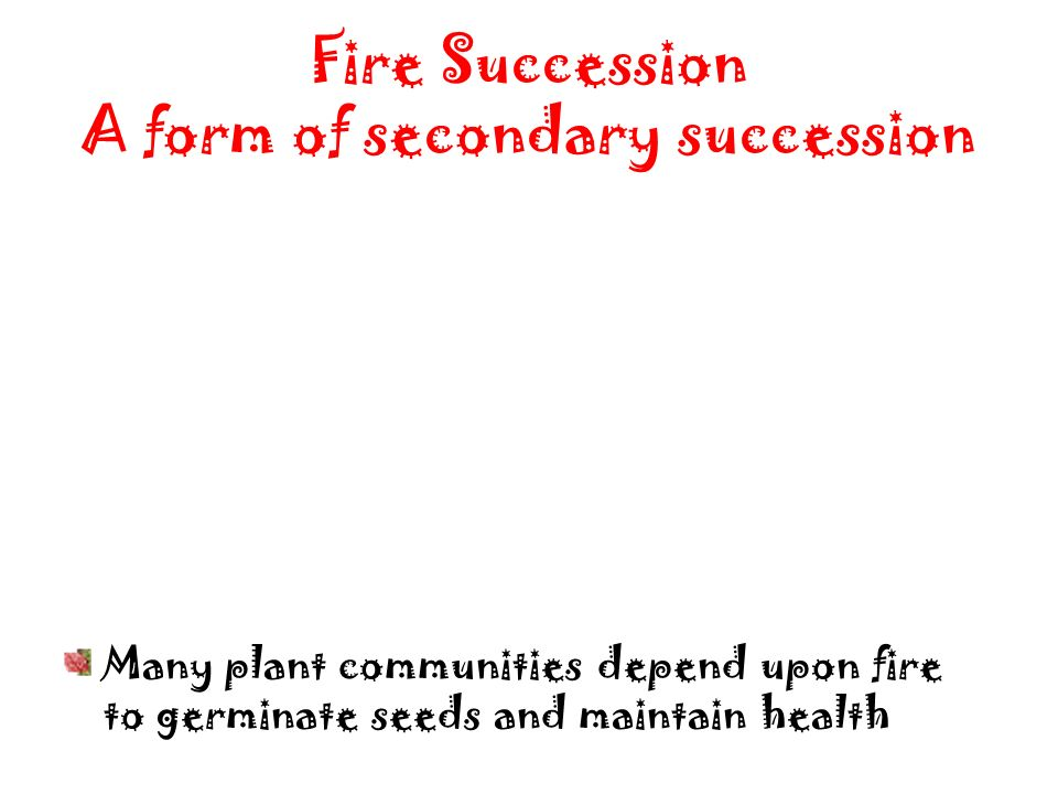 Fire Succession A form of secondary succession Many plant communities depend upon fire to germinate seeds and maintain health