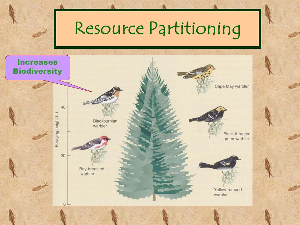Resource Partitioning Increases Biodiversity
