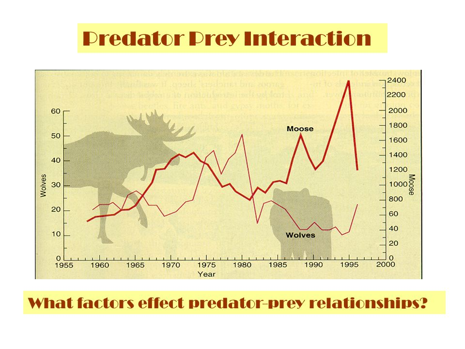 Predator Prey Interaction What factors effect predator-prey relationships?