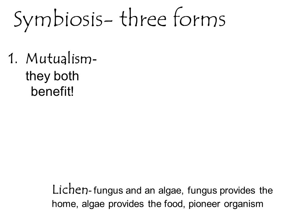 Symbiosis- three forms 1. Mutualism - they both benefit! Lichen - fungus and an algae, fungus provides the home, algae provides the food, pioneer orga