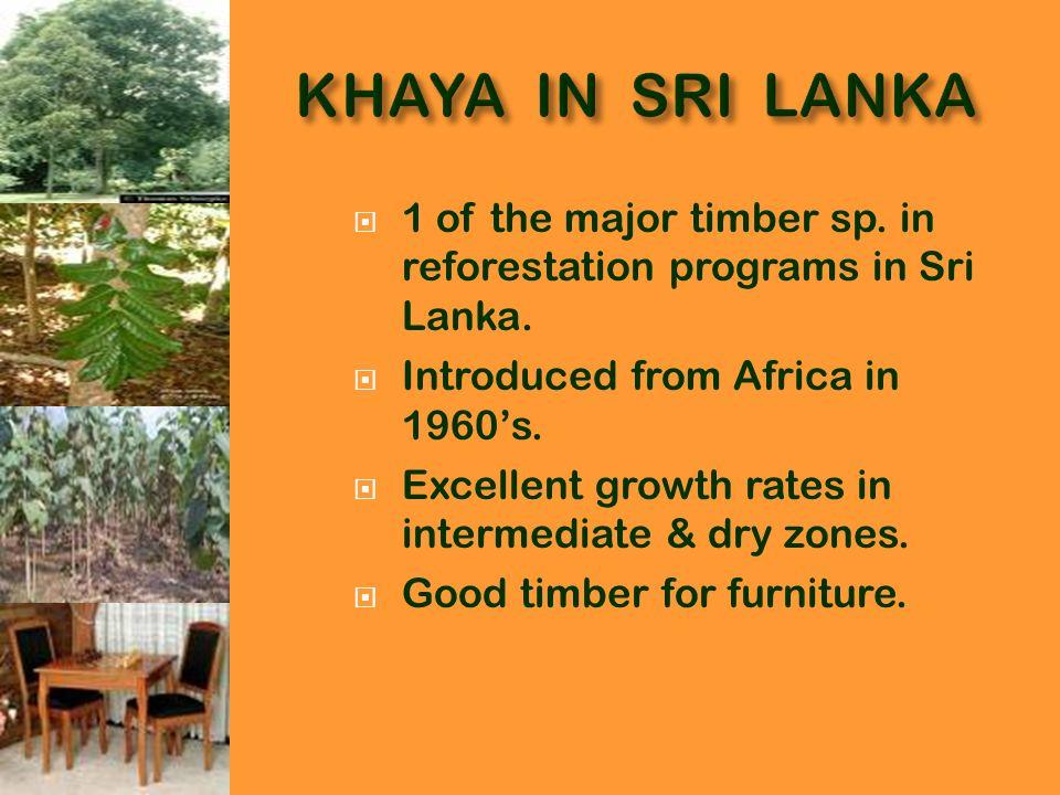 Reforestation in dry zone.Fast growth rates. Community like Khaya than teak.