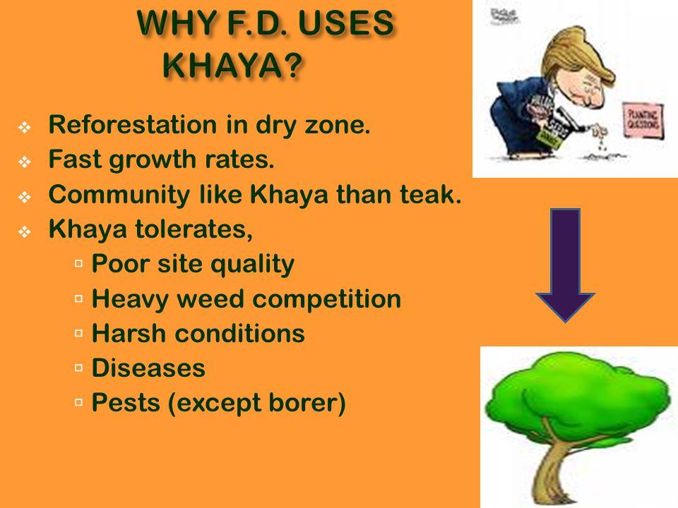 For borer attacks, 1) Treat with, Carbofuran Endosulfuran 2) Burn affected seedlings.