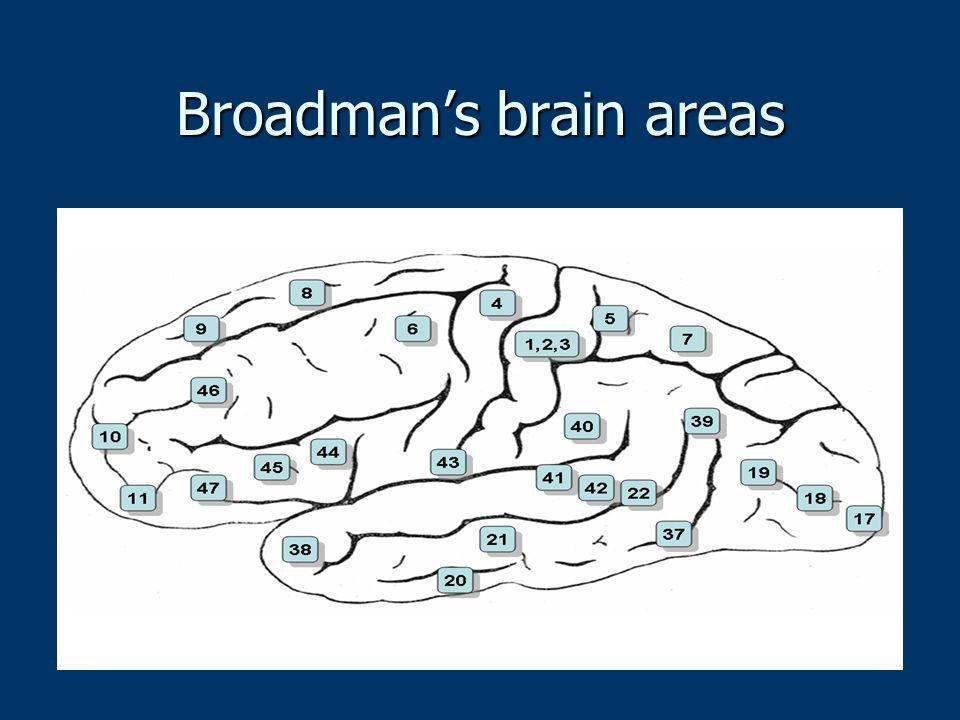 Broadmans brain areas