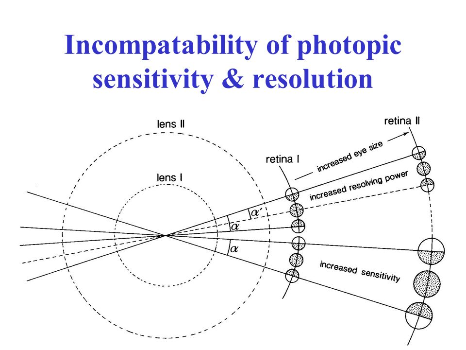 Incompatability of photopic sensitivity & resolution