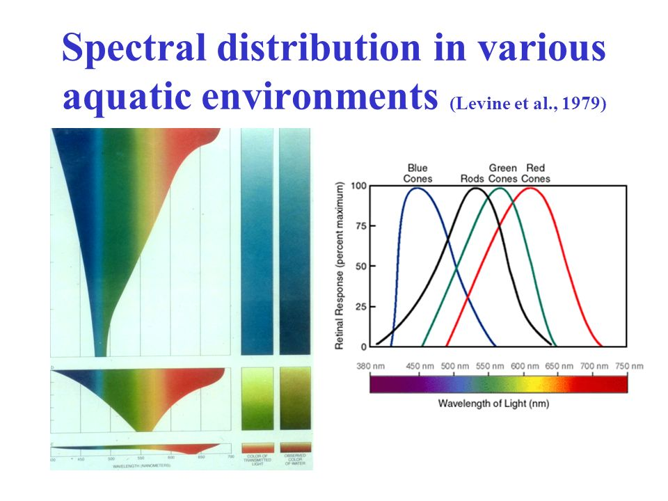 Spectral distribution in various aquatic environments (Levine et al., 1979)