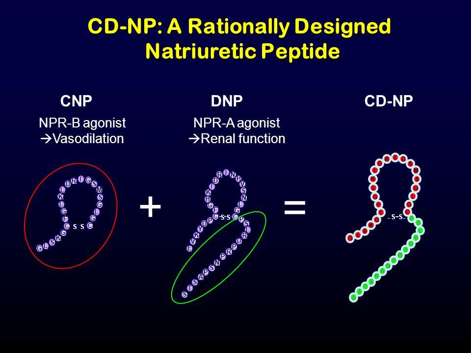 CD-NP: A Rationally Designed Natriuretic Peptide CNP S S S S G L S K G C F G L K L D R I G S M S G L G C NPR-B agonist Vasodilation CD-NP G L S C G L G S M S G I R D L K L G K G C F S S S S D R L S P P R P N A P S T S A - - - + DNP S S S S E V K Y D P C F G H K I D R I N H V S N L G C P S L R D P R P N S P A S T S NPR-A agonist Renal function =