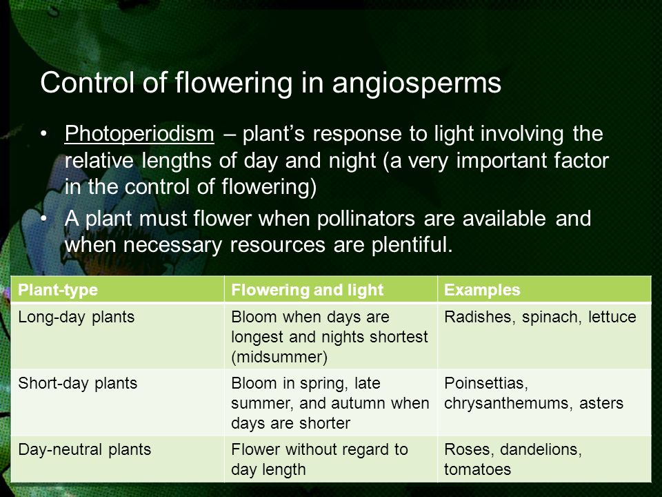 Control of flowering in angiosperms Photoperiodism – plants response to light involving the relative lengths of day and night (a very important factor