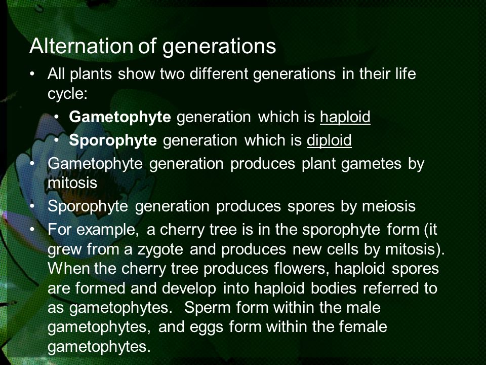 Alternation of generations All plants show two different generations in their life cycle: Gametophyte generation which is haploid Sporophyte generatio