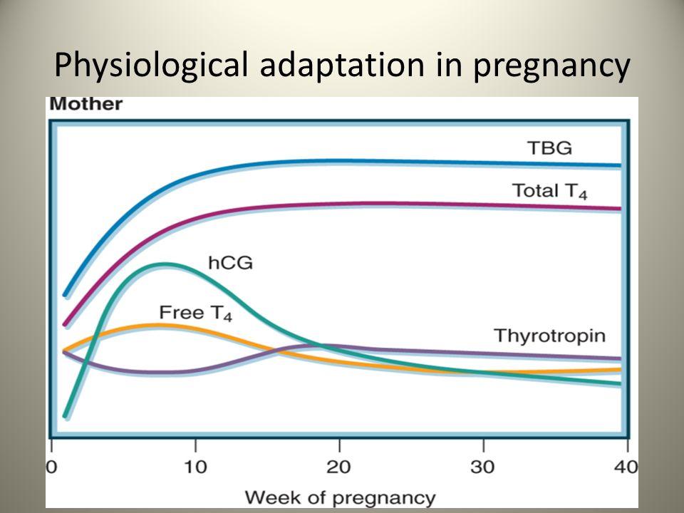 Pregnancy: screen for thyroid dysfn .