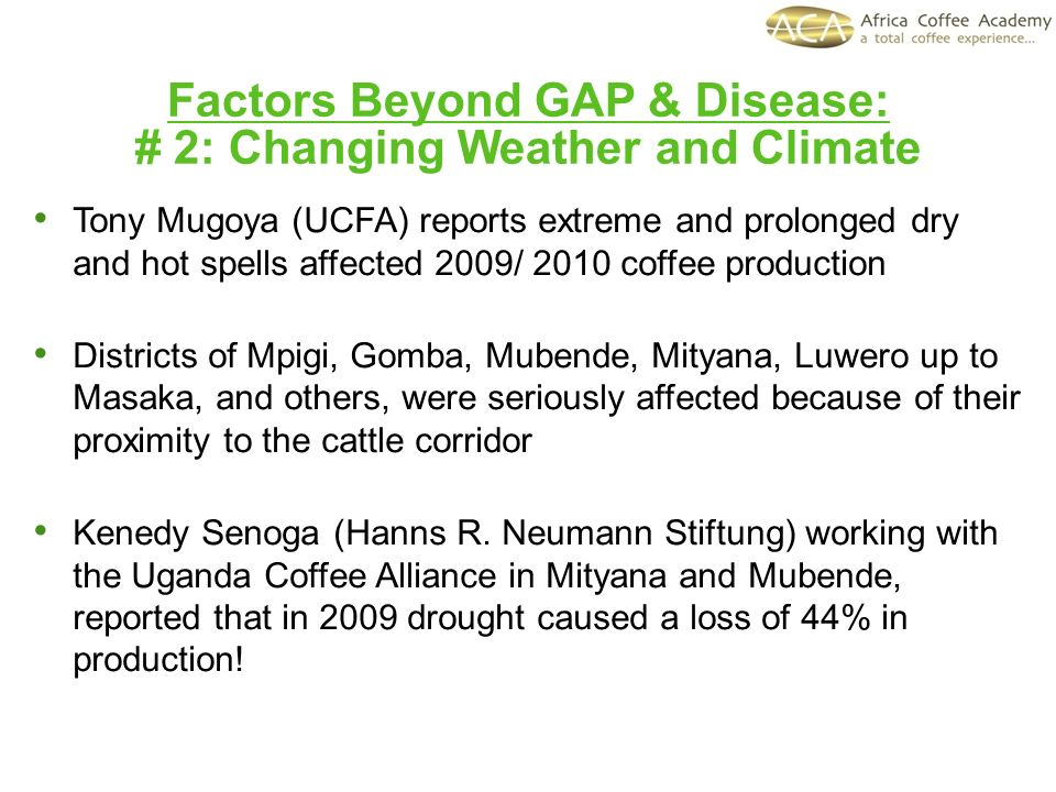Factors Beyond GAP & Disease: # 2: Changing Weather and Climate Tony Mugoya (UCFA) reports extreme and prolonged dry and hot spells affected 2009/ 201