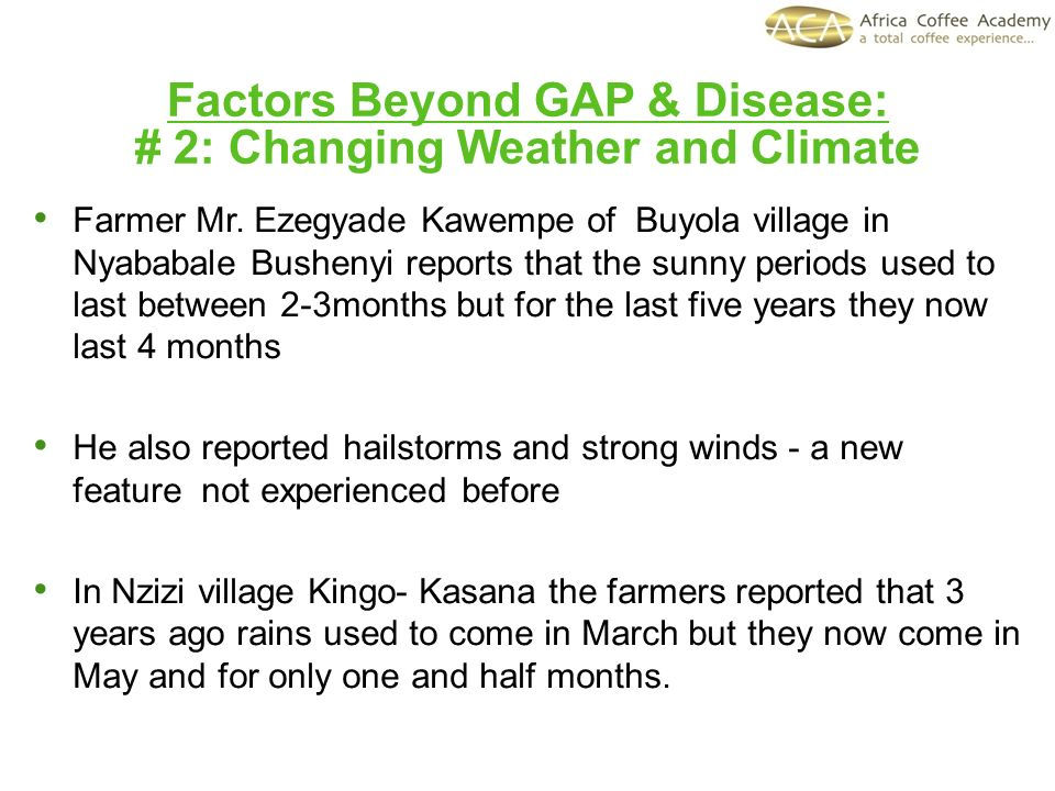 Factors Beyond GAP & Disease: # 2: Changing Weather and Climate Farmer Mr. Ezegyade Kawempe of Buyola village in Nyababale Bushenyi reports that the s