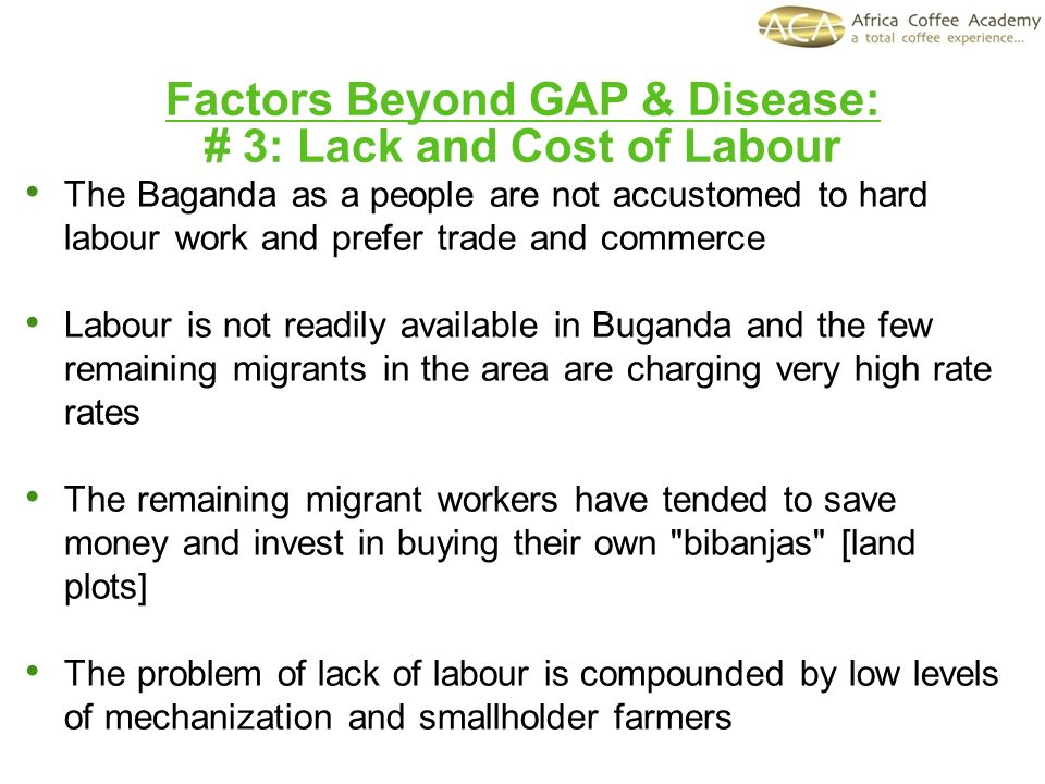 Factors Beyond GAP & Disease: # 3: Lack and Cost of Labour The Baganda as a people are not accustomed to hard labour work and prefer trade and commerc