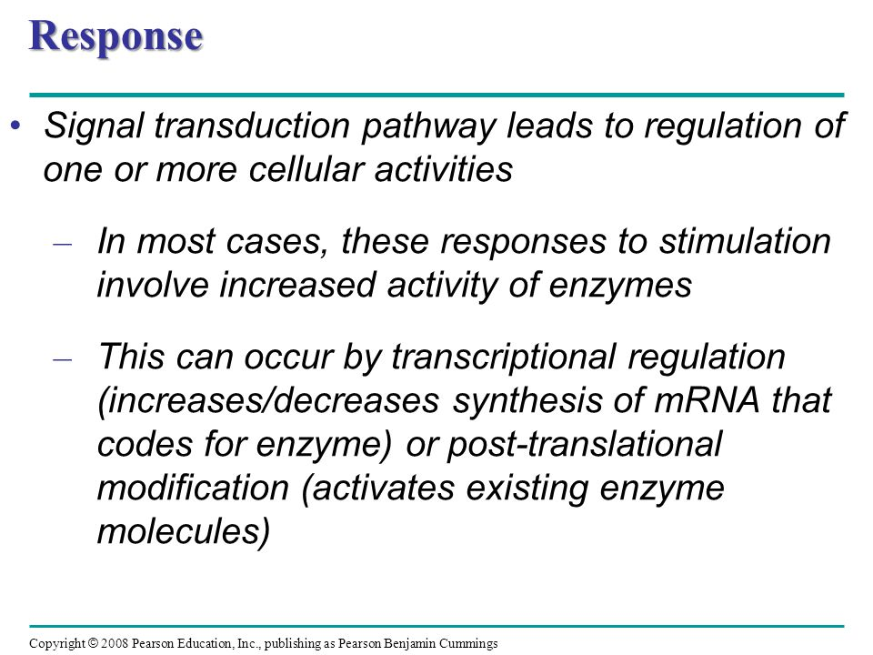 Copyright © 2008 Pearson Education, Inc., publishing as Pearson Benjamin Cummings Transcriptional Regulation Specific transcription factorsSpecific transcription factors bind directly to specific regions of DNA and control transcription of genes – In phytochrome-induced de-etiolation, several transcription factors activated by phosphorylation in response to appropriate light conditions Mechanism by which signal promotes new developmental course may depend on – Positive transcription factors (activators): proteins that increase transcription of specific genes – Negative transcription factors (repressors): proteins that decrease transcription of specific genes Mutation in Arabidopsis allows for light-grown morphology underground (except for pale color because no chlorophyll grown because no light) because genes activated by light normally blocked by repressor eliminated by mutation