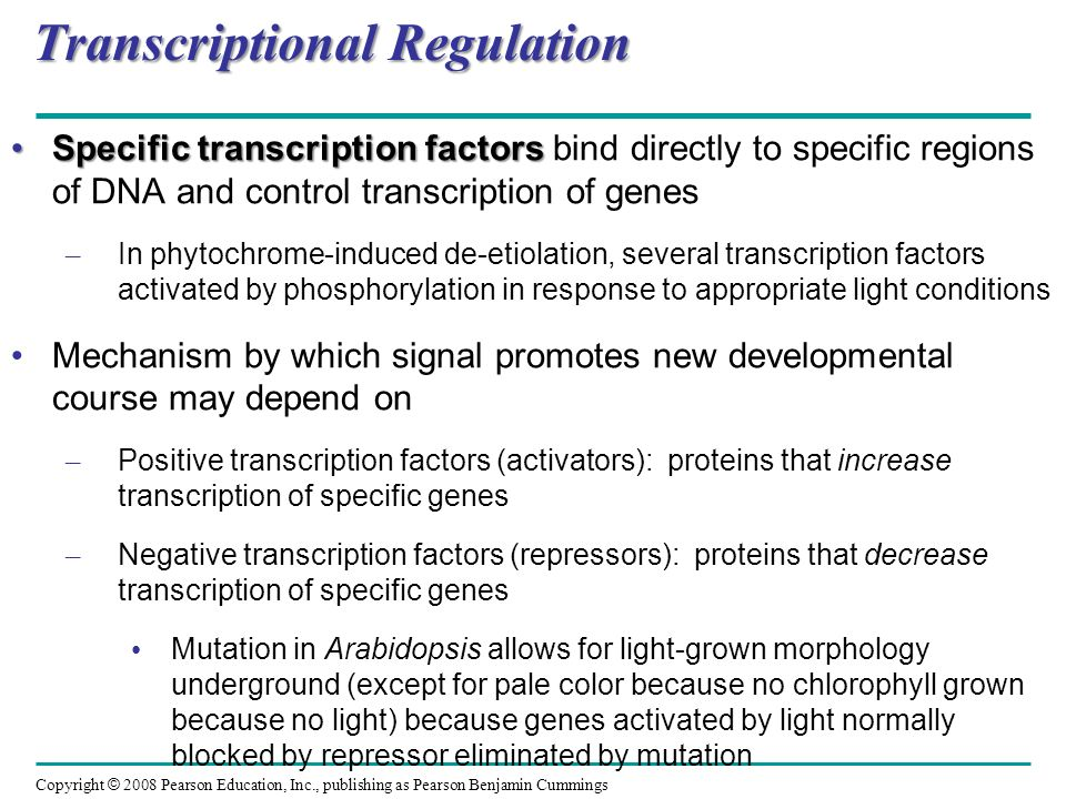 Copyright © 2008 Pearson Education, Inc., publishing as Pearson Benjamin Cummings Brassinosteroids BrassinosteroidsBrassinosteroids are steroids, chemically similar to sex hormones of animals – Induce cell elongation/division in stem segments and seedlings – Reduce leaf abscission (leaf drop) – Promote xylem differentiation
