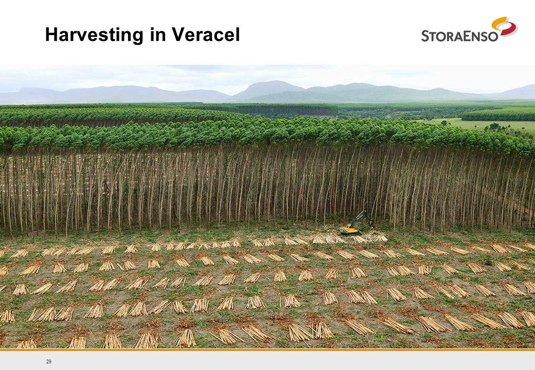29 Harvesting in Veracel