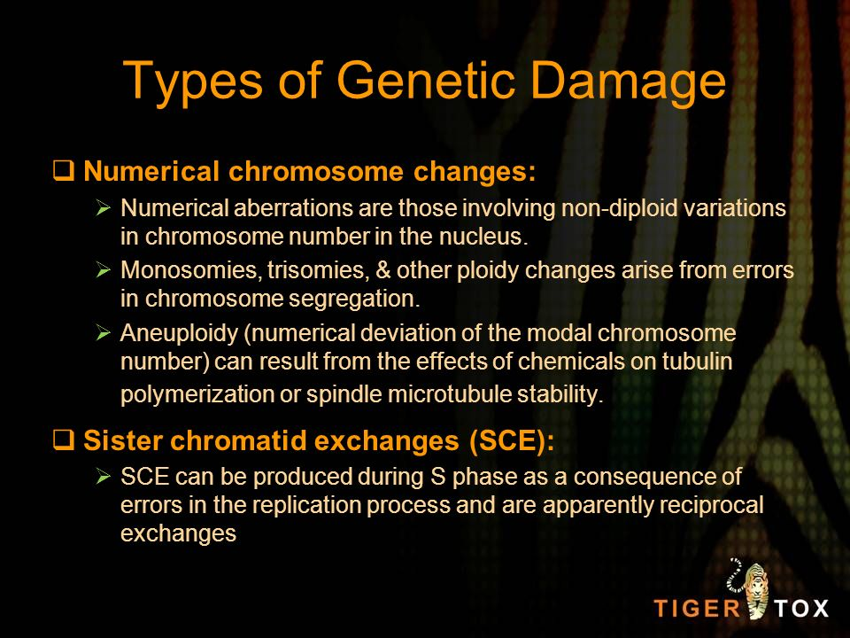 Types of Genetic Damage Numerical chromosome changes: Numerical aberrations are those involving non-diploid variations in chromosome number in the nuc
