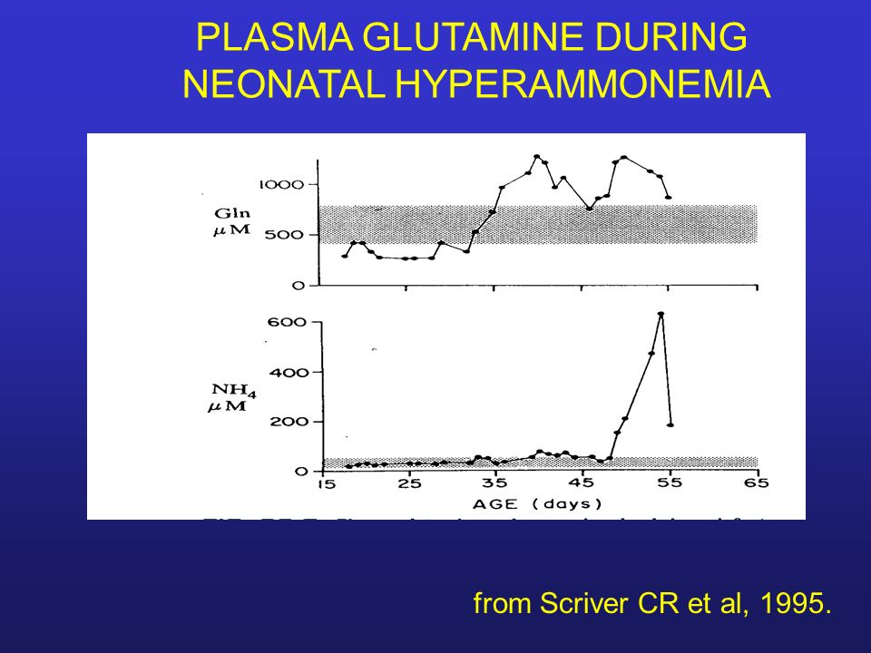 PLASMA GLUTAMINE DURING NEONATAL HYPERAMMONEMIA from Scriver CR et al, 1995.