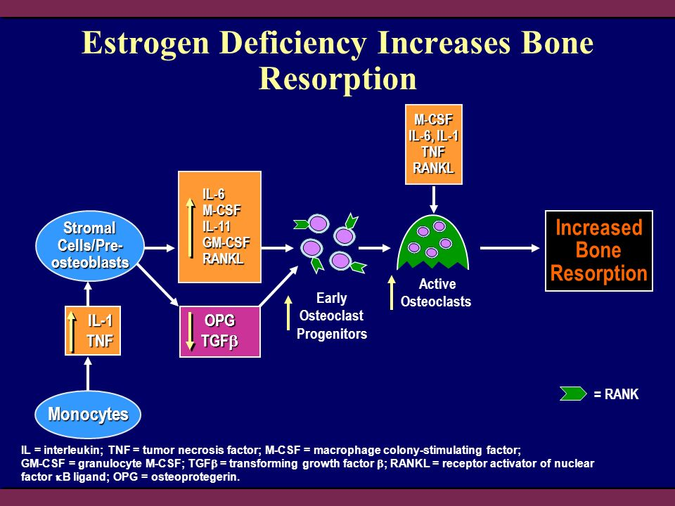 Estrogen Deficiency Increases Bone Resorption IL = interleukin; TNF = tumor necrosis factor; M-CSF = macrophage colony-stimulating factor; GM-CSF = granulocyte M-CSF; TGF = transforming growth factor ; RANKL = receptor activator of nuclear factor B ligand; OPG = osteoprotegerin.