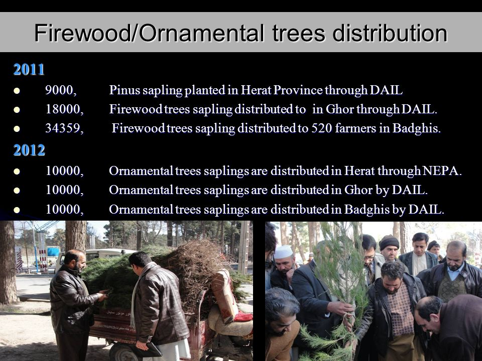 Firewood/Ornamental trees distribution 2011 9000, Pinus sapling planted in Herat Province through DAIL 9000, Pinus sapling planted in Herat Province through DAIL 18000, Firewood trees sapling distributed to in Ghor through DAIL.