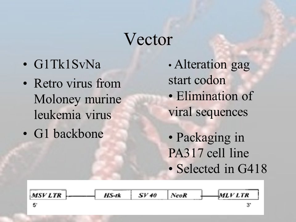 Vector G1Tk1SvNa Retro virus from Moloney murine leukemia virus G1 backbone Alteration gag start codon Elimination of viral sequences Packaging in PA3