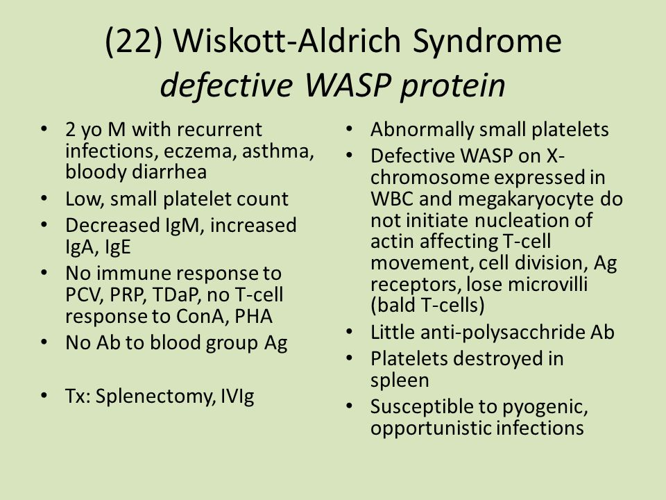 (22) Wiskott-Aldrich Syndrome defective WASP protein 2 yo M with recurrent infections, eczema, asthma, bloody diarrhea Low, small platelet count Decreased IgM, increased IgA, IgE No immune response to PCV, PRP, TDaP, no T-cell response to ConA, PHA No Ab to blood group Ag Tx: Splenectomy, IVIg Abnormally small platelets Defective WASP on X- chromosome expressed in WBC and megakaryocyte do not initiate nucleation of actin affecting T-cell movement, cell division, Ag receptors, lose microvilli (bald T-cells) Little anti-polysacchride Ab Platelets destroyed in spleen Susceptible to pyogenic, opportunistic infections