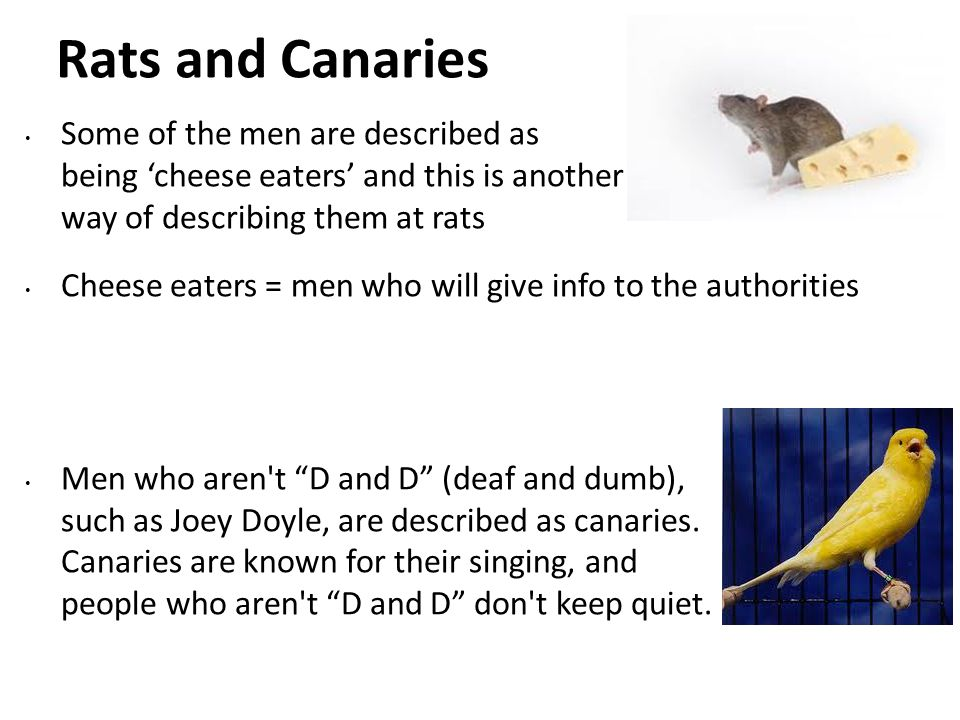 Rats and Canaries Some of the men are described as being cheese eaters and this is another way of describing them at rats Cheese eaters = men who will give info to the authorities Men who aren t D and D (deaf and dumb), such as Joey Doyle, are described as canaries.