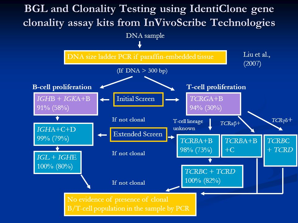 BGL and Clonality Testing using IdentiClone gene clonality assay kits from InVivoScribe Technologies DNA sample DNA size ladder PCR if paraffin-embedd