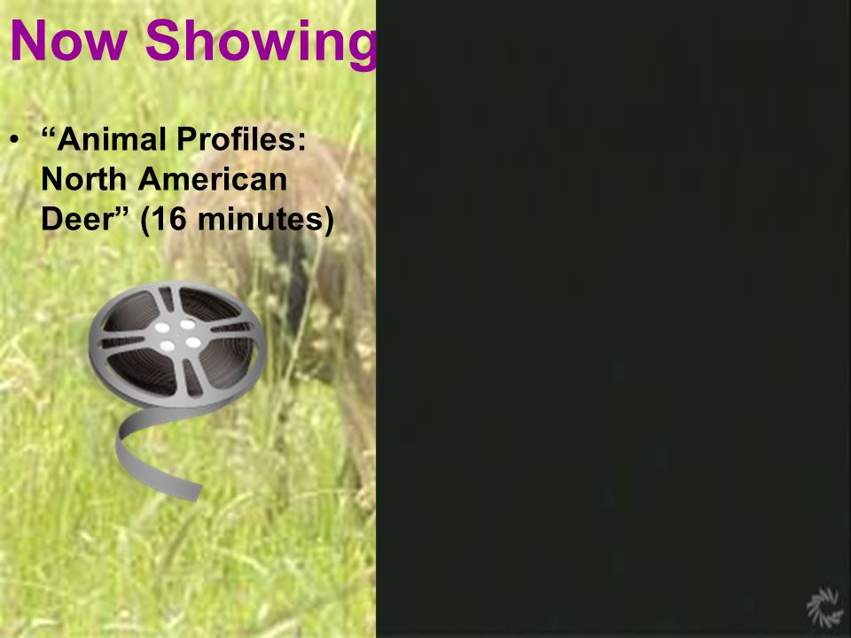 Now Showing: Animal Profiles: North American Deer (16 minutes)