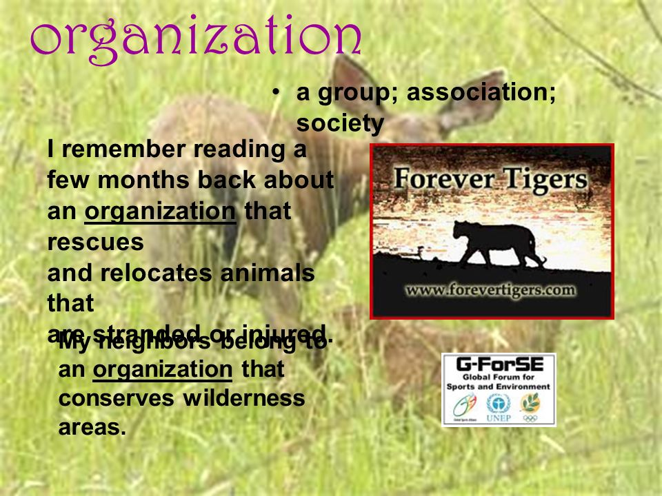 organization a group; association; society I remember reading a few months back about an organization that rescues and relocates animals that are stra