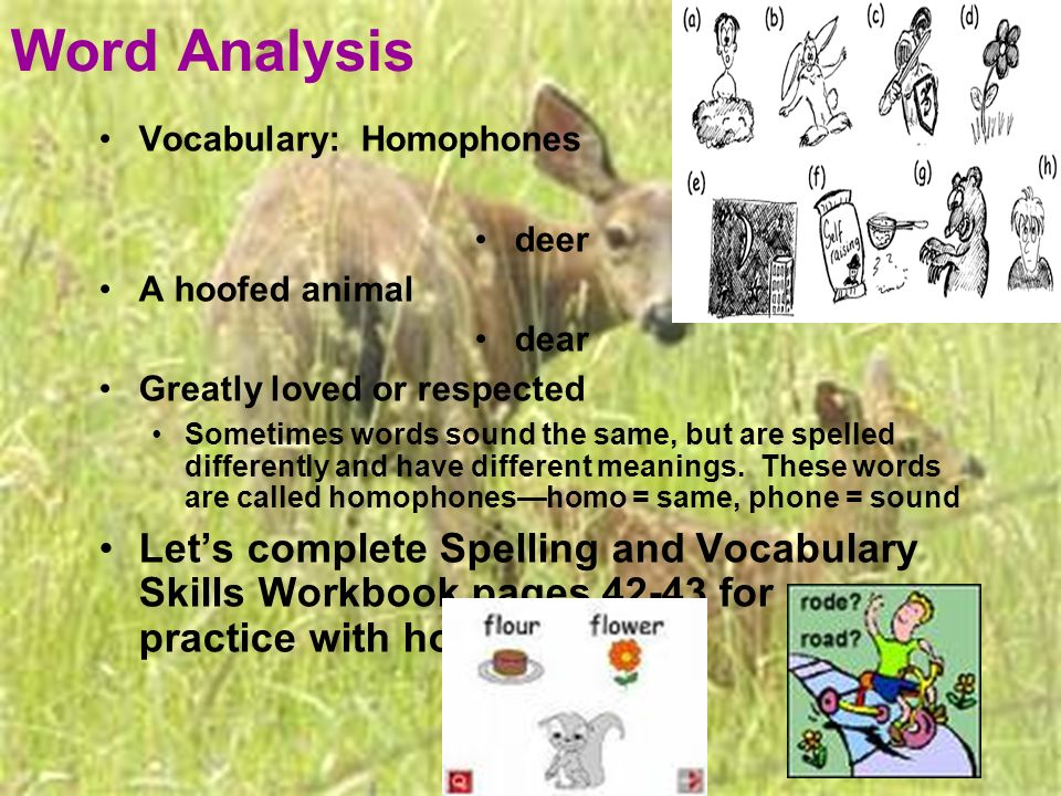Word Analysis Vocabulary: Homophones deer A hoofed animal dear Greatly loved or respected Sometimes words sound the same, but are spelled differently