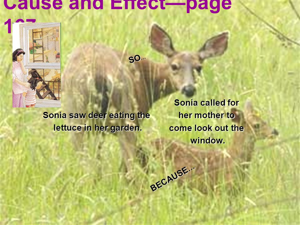 Cause and Effectpage 167 Sonia called for her mother to come look out the window. Sonia saw deer eating the lettuce in her garden. lettuce in her gard