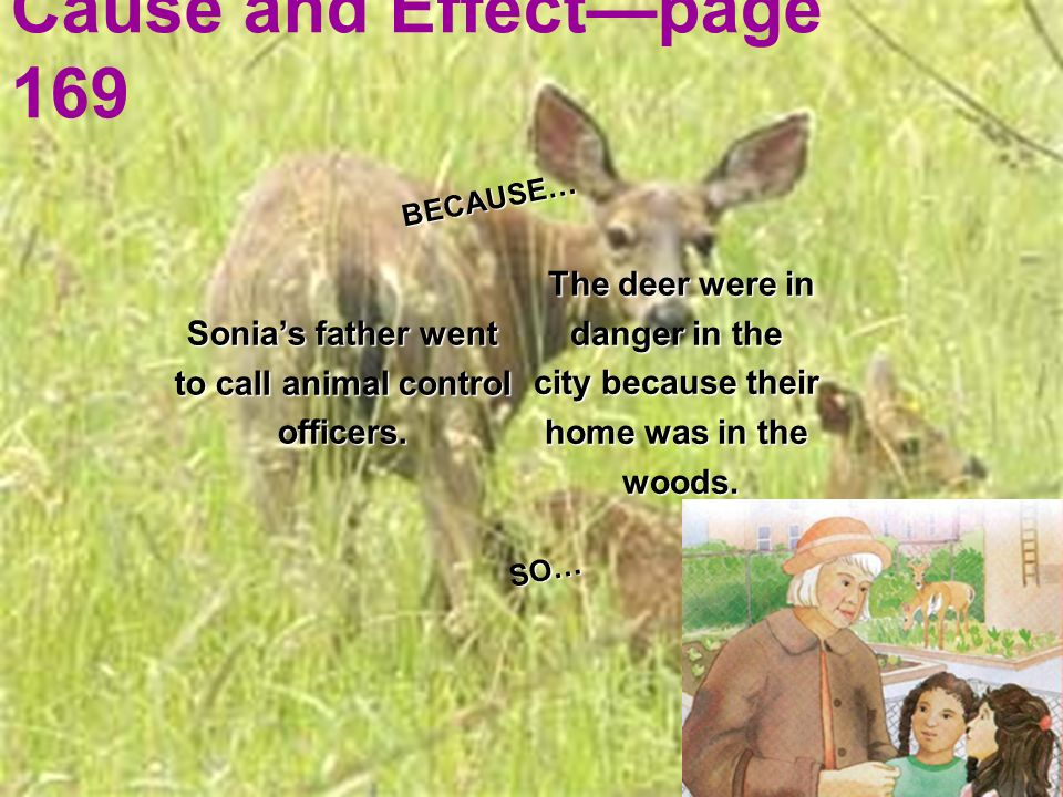Cause and Effectpage 169 The deer were in danger in the city because their home was in the woods. Sonias father went to call animal control officers.