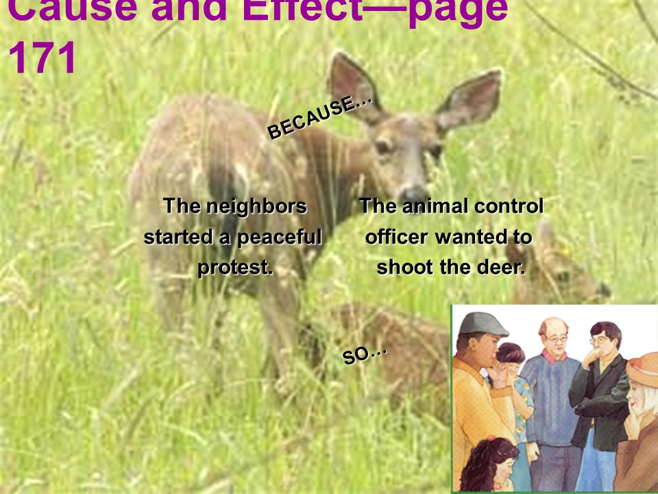 Cause and Effectpage 171 The animal control officer wanted to shoot the deer. The neighbors started a peaceful protest. BECAUSE… SO…