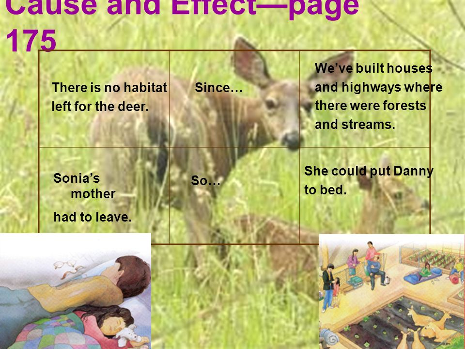 Cause and Effectpage 175 There is no habitat left for the deer. Since… Weve built houses and highways where there were forests and streams. Sonias mot