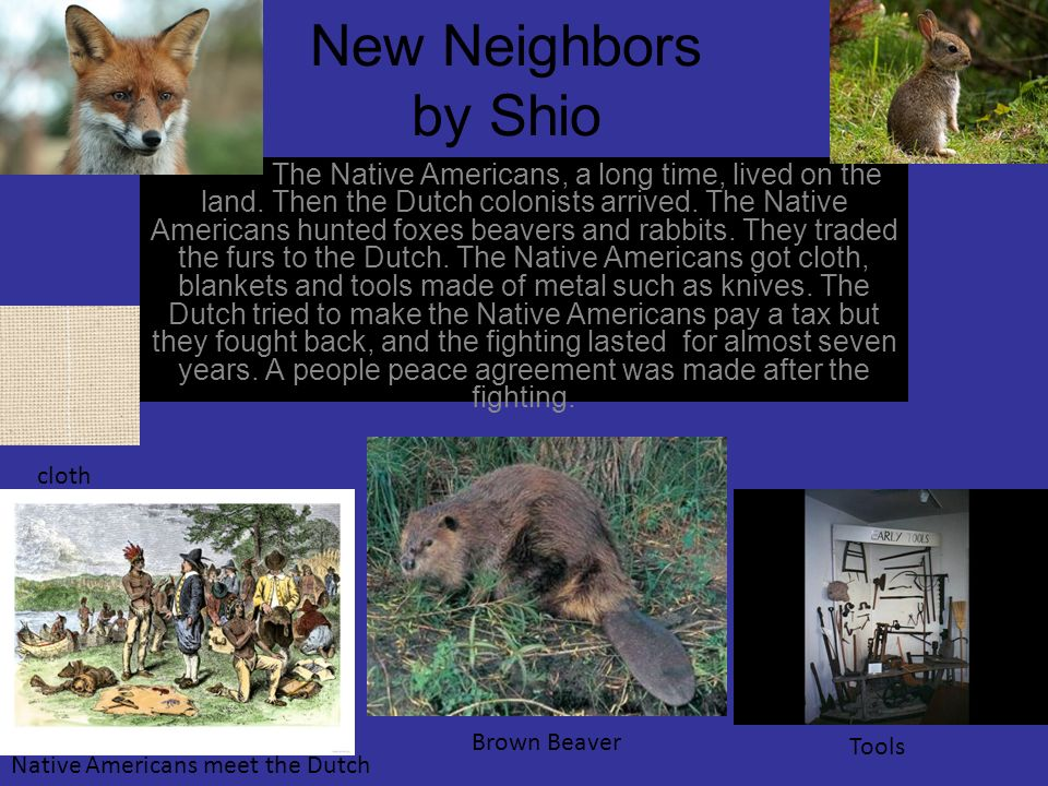 New Neighbors by Shio The Native Americans, a long time, lived on the land. Then the Dutch colonists arrived. The Native Americans hunted foxes beaver