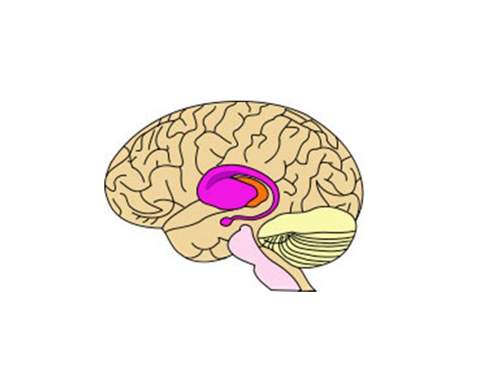 Sydenham chorea Sydenham chorea is a movement disorder characterized by chorea, emotional lability, and hypotonia.