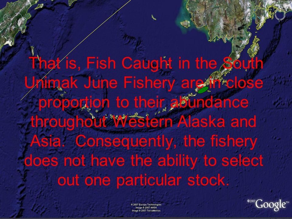 That is, Fish Caught in the South Unimak June Fishery are in close proportion to their abundance throughout Western Alaska and Asia.