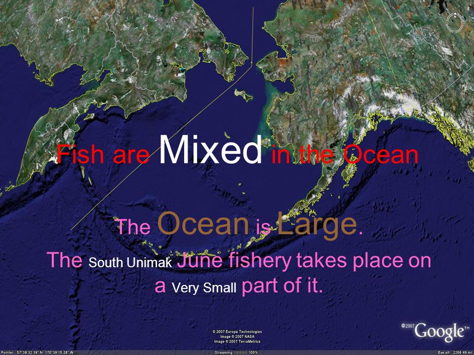 Fish are Mixed in the Ocean The Ocean is Large.