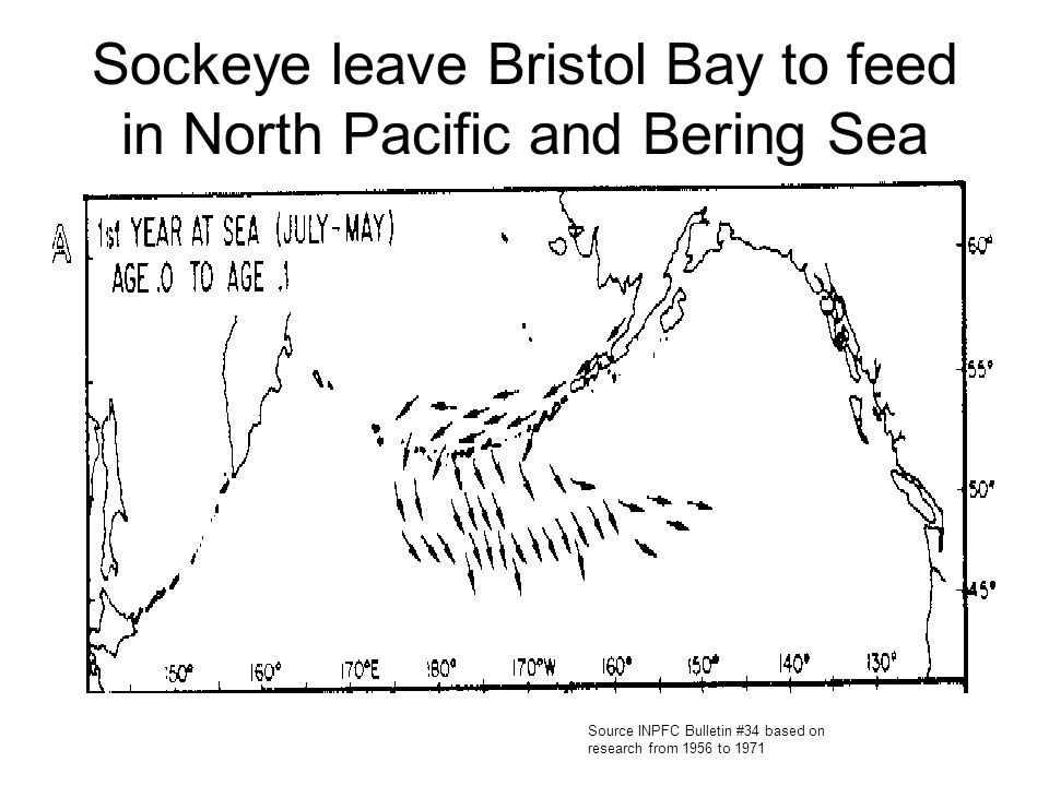 Sockeye leave Bristol Bay to feed in North Pacific and Bering Sea Source INPFC Bulletin #34 based on research from 1956 to 1971