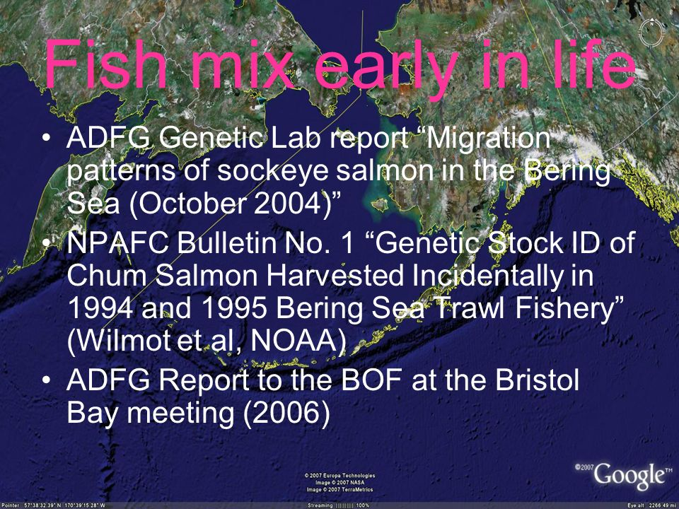 Fish mix early in life ADFG Genetic Lab report Migration patterns of sockeye salmon in the Bering Sea (October 2004) NPAFC Bulletin No.