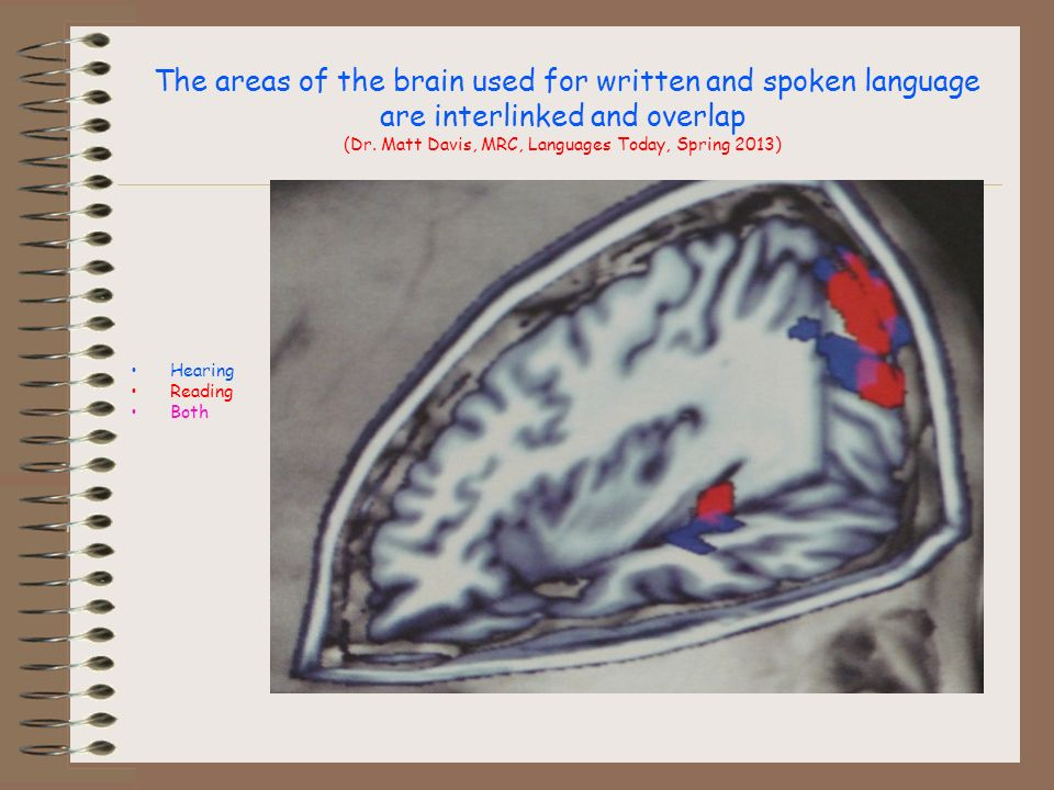 The areas of the brain used for written and spoken language are interlinked and overlap (Dr.