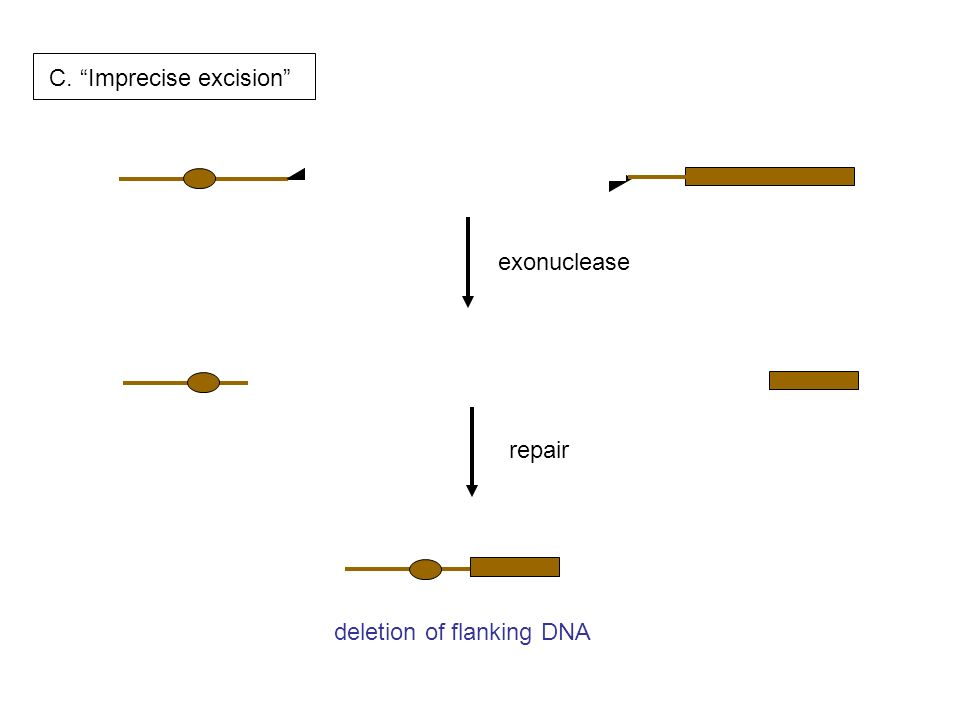 C. Imprecise excision exonuclease repair deletion of flanking DNA