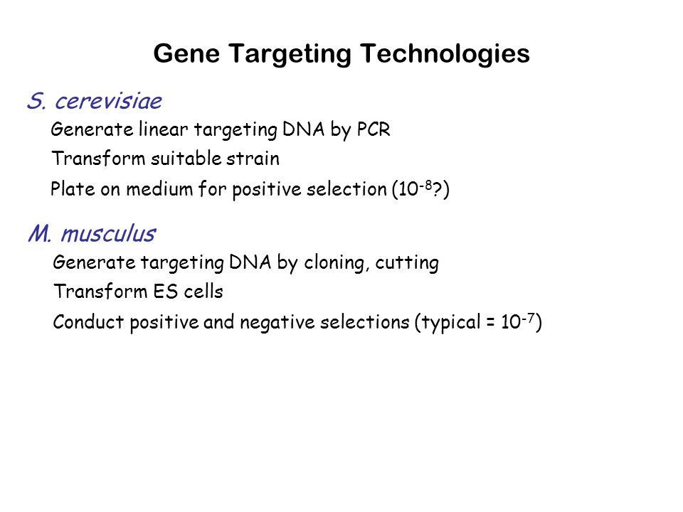 Gene Targeting Technologies S. cerevisiae Generate linear targeting DNA by PCR Transform suitable strain Plate on medium for positive selection (10 -8