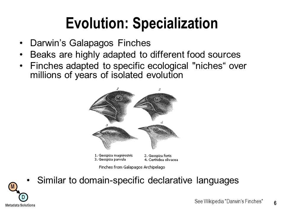M D Metadata Solutions 6 Evolution: Specialization Darwins Galapagos Finches Beaks are highly adapted to different food sources Finches adapted to specific ecological niches over millions of years of isolated evolution Similar to domain-specific declarative languages See Wikipedia Darwin s Finches
