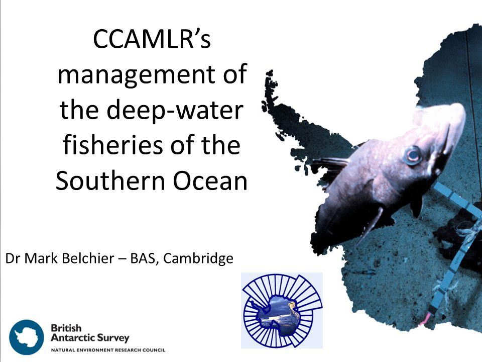 CCAMLRs management of the deep-water fisheries of the Southern Ocean Dr Mark Belchier – BAS, Cambridge