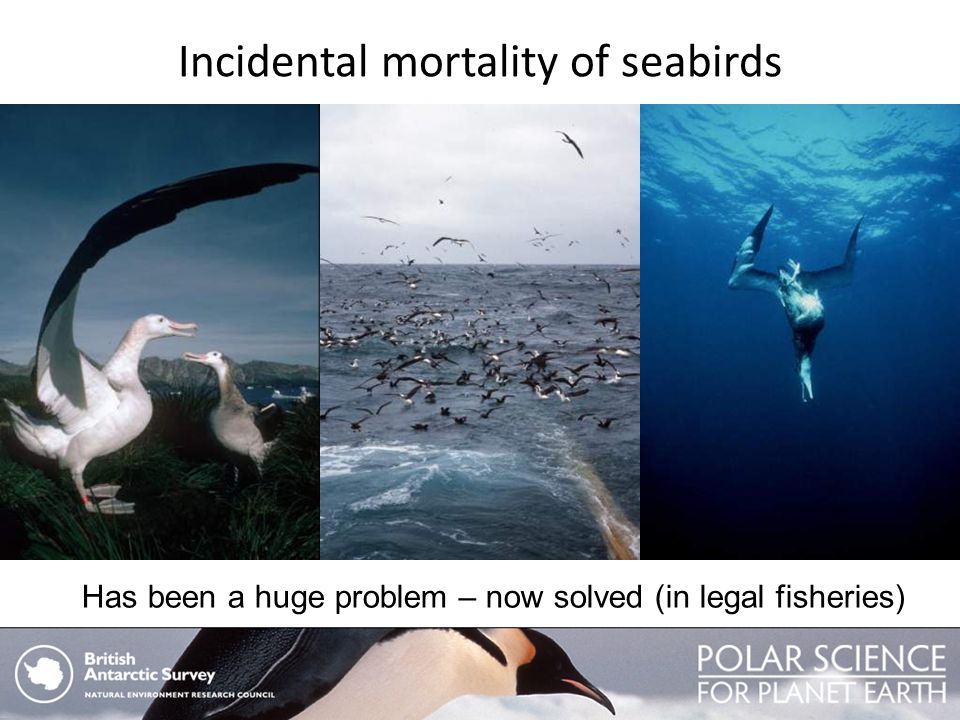 Incidental mortality of seabirds Has been a huge problem – now solved (in legal fisheries)
