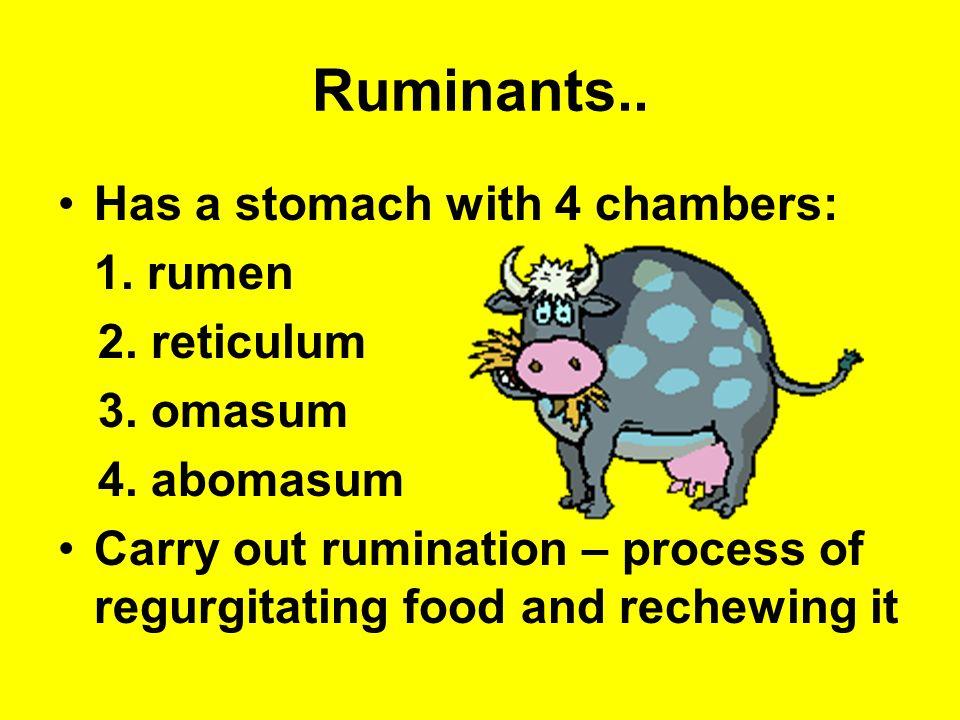 Ruminants..