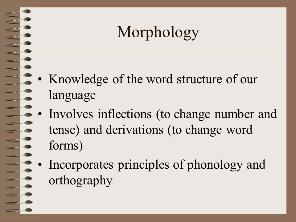 Morphology Knowledge of the word structure of our language Involves inflections (to change number and tense) and derivations (to change word forms) In