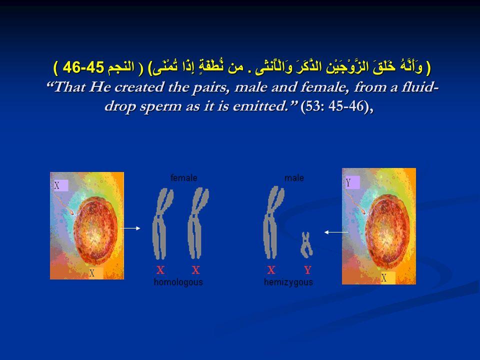 ( وَأَنَّهُ خَلَقَ الزَّوْجَيْنِ الذَّكَرَ وَالْأُنثَىِ. من نُّطْفَةٍ إِذَا تُمْنَى ) ) النجم 45-46 ) That He created the pairs, male and female, from